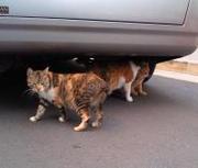 0912_cats_tokyo_4