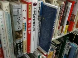 20100402_yaesubok02